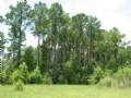 Rincon Multi-family : Rincon : Effingham County : Georgia