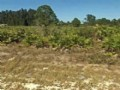 Buildable Lot In Lehigh Acres