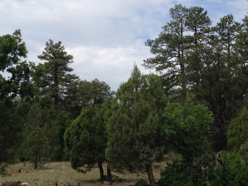 Tamarron Pines : Happy Jack : Coconino County : Arizona