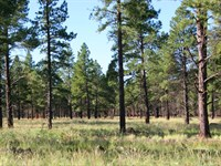 Tamarron Pines : Happy Jack : Coconino County : Arizona