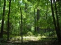 5.162 Acres Of Wooded Bliss : Moncure : Chatham County : North Carolina