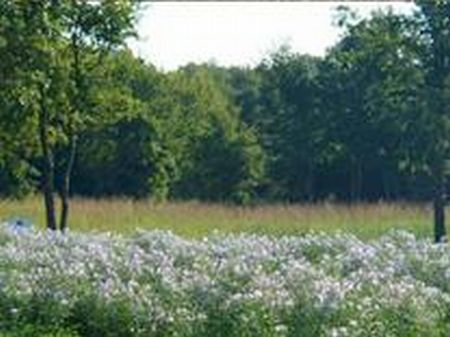Beautiful 1/2 Acre Wooded Site : Lipan : Parker County : Texas