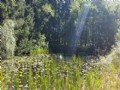New York Land For Sale With Pond
