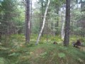 Mostly Wooded Residential Land