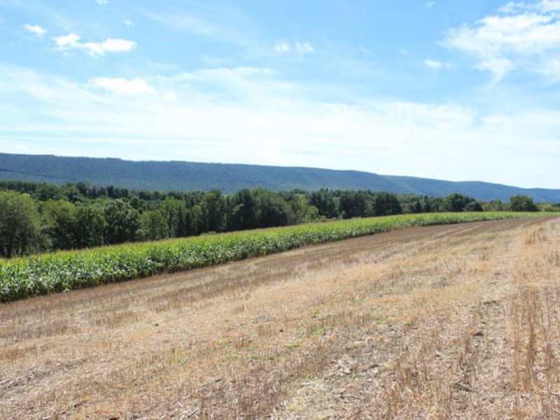 16 +/- Acres Of Land : Stillwater : Columbia County : Pennsylvania