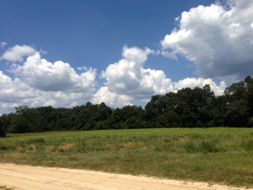12.5 +/- Ac Of Crop Land : Banks : Pike County : Alabama