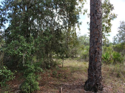 4.69ac - Low Tax Area Close To Town : Bronson : Levy County : Florida