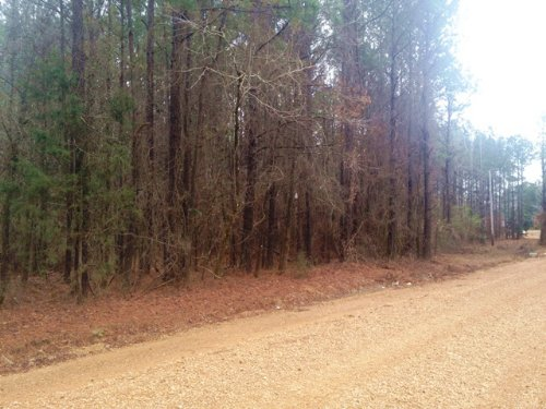1.3 Acre Lot - No Covenants : Starkville : Oktibbeha County : Mississippi