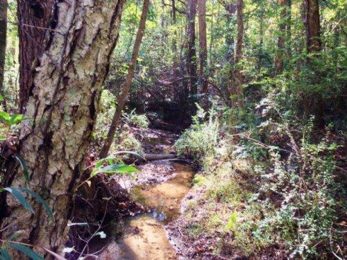 Quiet Creek : Danielsville : Madison County : Georgia