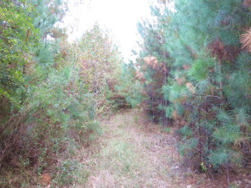 20 +/- Acres In Summit : Summit : Pike County : Mississippi