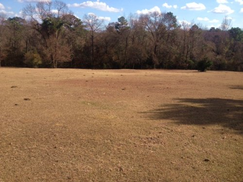 20 +/- Acres. Great Homesite : Troy : Pike County : Alabama