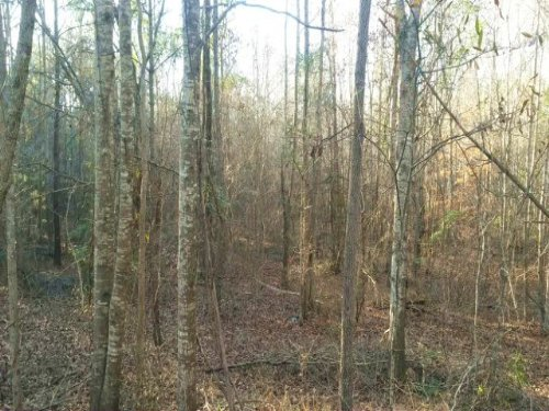 15 +/- Acres On Hwy 231 : Troy : Pike County : Alabama