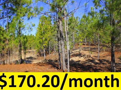 $0 Down Wooded Lot Near Cadwell : Cadwell : Laurens County : Georgia