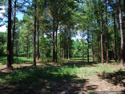 Great 5 Acre Home Sites : Picayune : Pearl River County : Mississippi