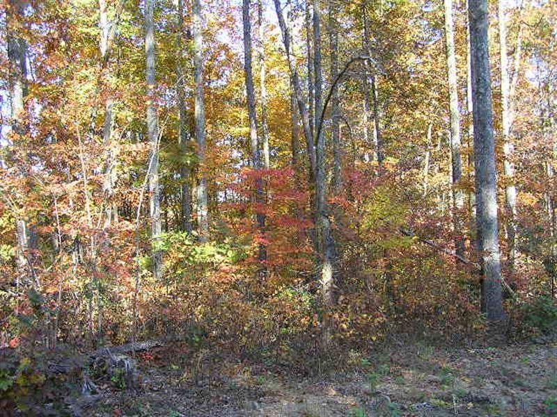 Bluff, Woods, Private : Spencer : Van Buren County : Tennessee