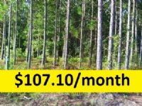 3.43 Ac Wooded Lot On Paved Rd