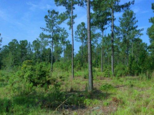 *sold*14.01 Acres - Camden, Sc : Camden : Kershaw County : South Carolina