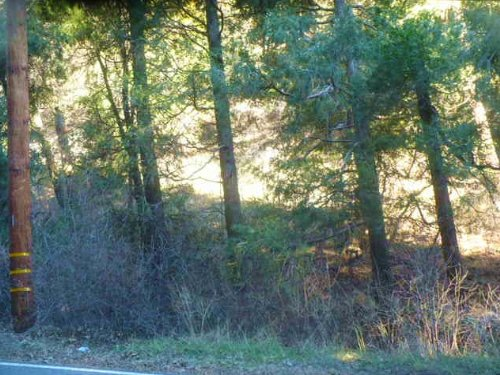 Lot For Sale With Paved Road Access : Crestline : San Bernardino County : California