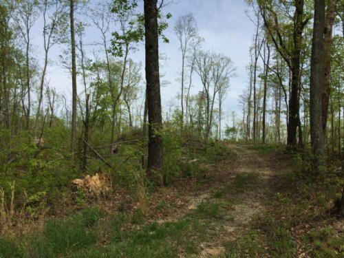 10+/- Acres Wooded Lot : Sequatchie : Marion County : Tennessee