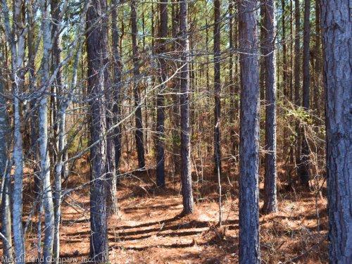 4.7 Acre Homesite In Whitestone : Spartanburg : South Carolina