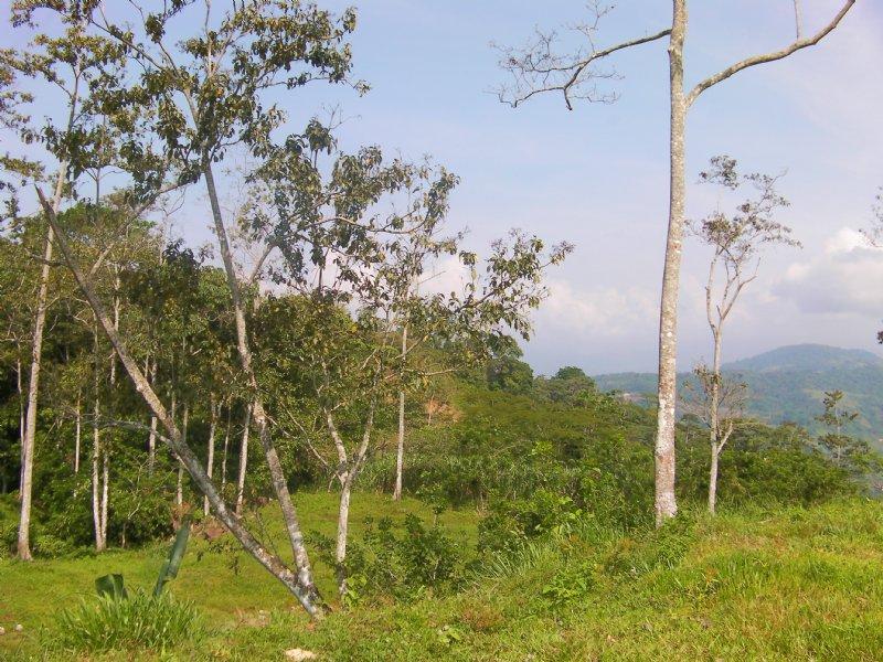 $70,000 7 Acre Mountain Farm : Turrialba : Costa Rica