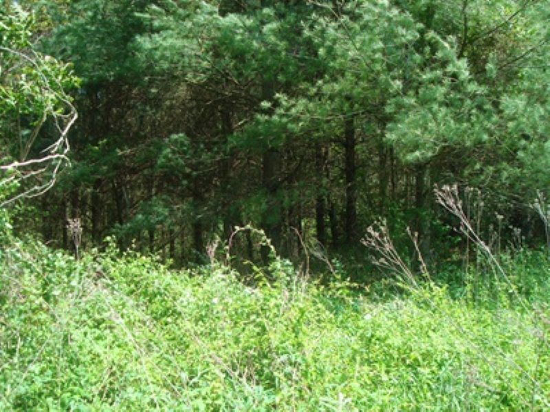 20 Acres, Owner Financing Available : Austinville : Wythe County : Virginia