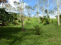 19 Acre Tree Farm W/ Creek : La Suiza De Turrialba : Costa Rica