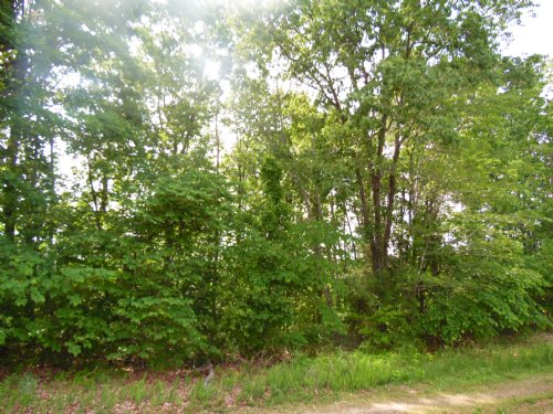 Buy A Blue View : Appomattox : Virginia