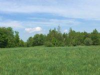 Deerland Forest