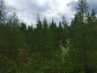 Beartown Forest