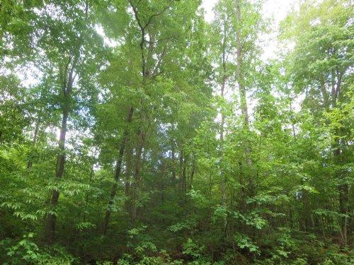 Weaver Road : Green Bay : Prince Edward County : Virginia