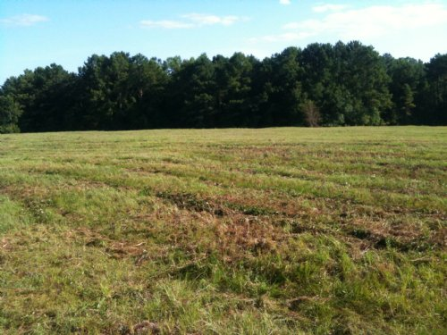 20 +/- Acres Perfect To Develop : Troy : Pike County : Alabama