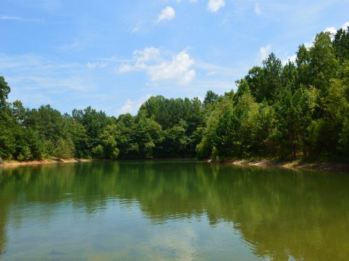 District 6 - 17.31 Acres With Pond : Roebuck : Spartanburg County : South Carolina