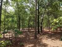 4 +/- Acres Off Stokes Bridge Road : Bishopville : Lee County : South Carolina