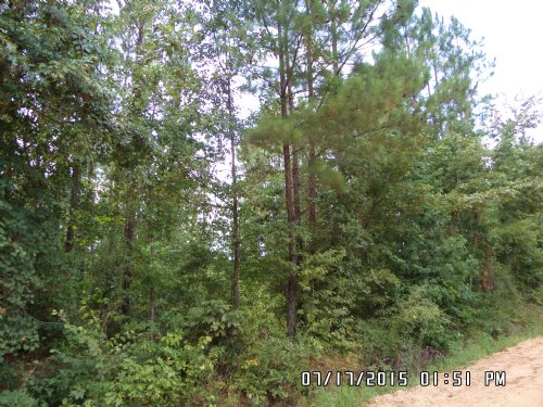 3 Acre Lots By Penholloway Creek : Jesup : Wayne County : Georgia