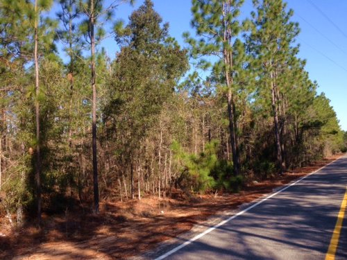 11 Acres Wooded  Homesite : Jesup : Wayne County : Georgia