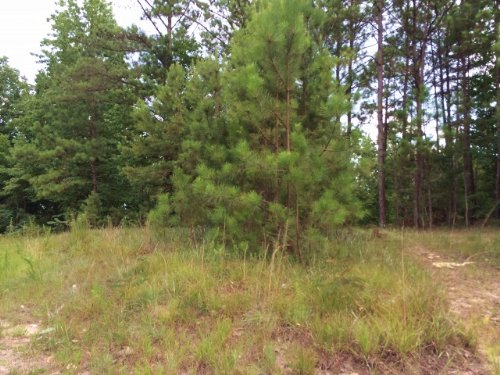 Bank Owned 9 Wooded Acres : Odenville : St. Clair County : Alabama