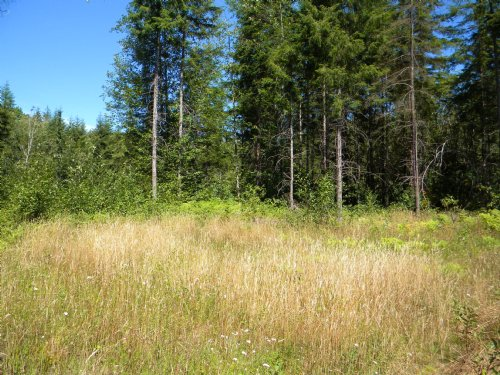 7 Forested Acres : Elma : Grays Harbor County : Washington