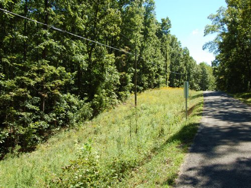 Level Land With Mature Hardwoods : Altamont : Grundy County : Tennessee