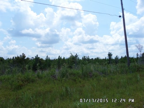 15 Acres On Collins Loop : Odum : Wayne County : Georgia