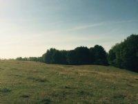 Amboy Woods & Meadows