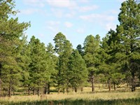 Arizona Forested Cabin Site : Alpine : Apache County : Arizona