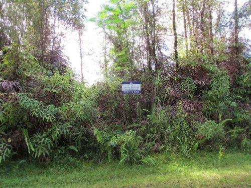 Near Hilo, Owner Financing : Pahoa : Hawaii County : Hawaii