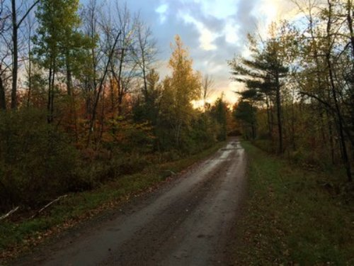 Near Whiskey Flats State Forest : Potsdam : Saint Lawrence County : New York