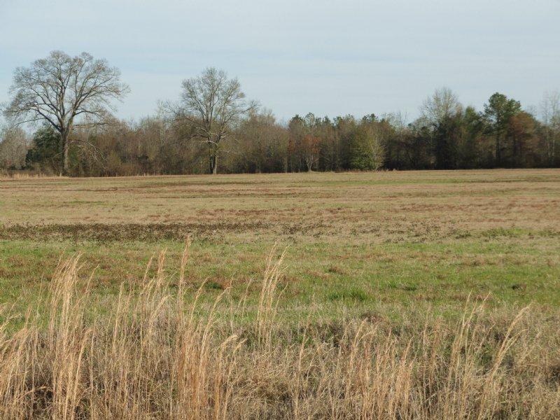 15 Acres - Level Land : Byron : Peach County : Georgia