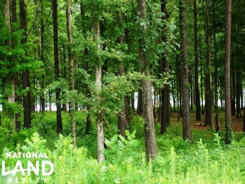 1.08 Acre Recreational Homesite : Akron : Hale County : Alabama