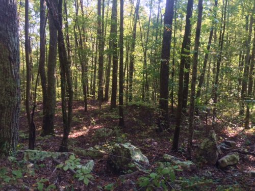 5.00+/- Acres On Sequatchie Mtn : Sequatchie : Marion County : Tennessee