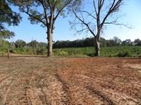 10-015 Liberty Tract : Greenville : Butler County : Alabama