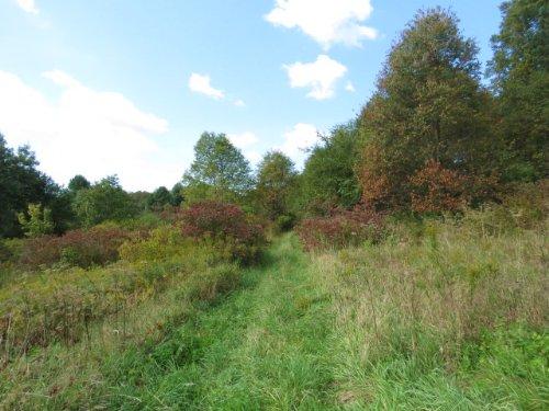 Beautiful Recreational Land : Williamstown : Oswego County : New York