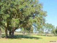 Thunder Ranch 13.98 Acres